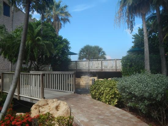 Club Regency of Marco Island: more of the landscaping