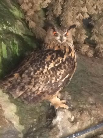 Les Marecottes, İsviçre: Zoo Et Piscine des Marecottes