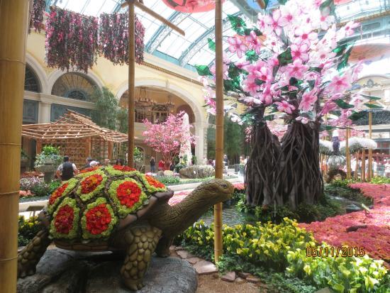 Spring 2015 Exhibit Picture Of Conservatory Botanical Gardens At Bellagio Las Vegas
