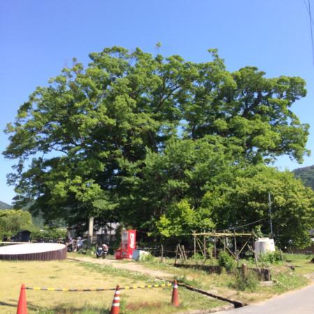 Nomano Okeyaki