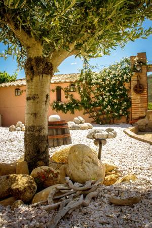 Mas St. Joseph: Olive tree