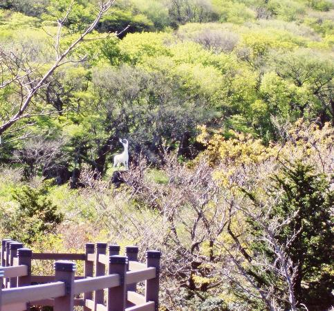 Jeju 1100 Altitude Wetland
