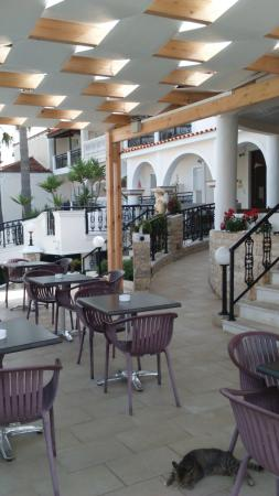 Hotel Venus  & Suites: snack bar area