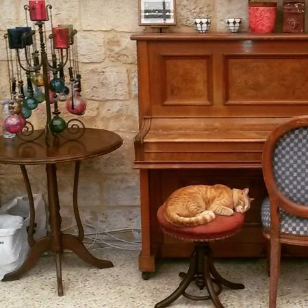 Al-Fanar Auberge: Le chat de l'auberge faisant sa sieste.