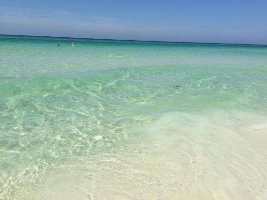 Santa Rosa Beach, FL: Beauty!