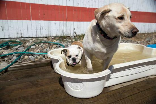 The Wonder Bar: Yappy Hour Pool Party