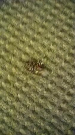 Sleep Inn I 95 North Savannah: I have a phobia and roaches are NOT my friend!!! You should exterminate before the guest arrives
