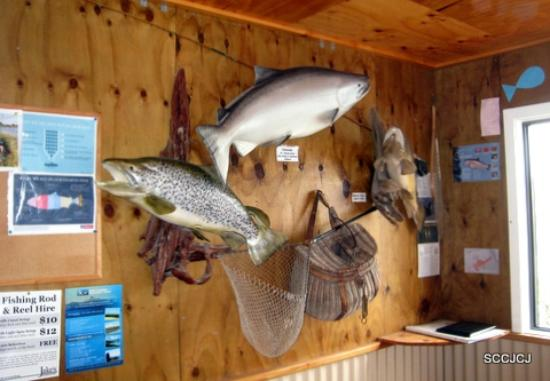 Twizel, Nya Zeeland: High Country Salmon