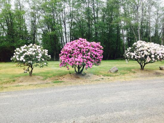 Pacific Campground and RV Park