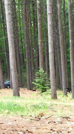 Willard Brook State Park