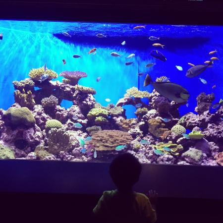 The Big Tank Picture Of Birch Aquarium At Scripps La