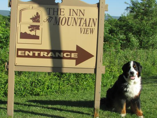Inn at Mountainview: Dog Friendly to a Friendly Dog