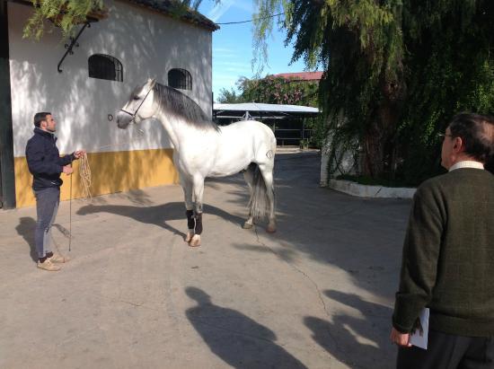 La Carlota, Spain: Semental de Yeguada Lovera
