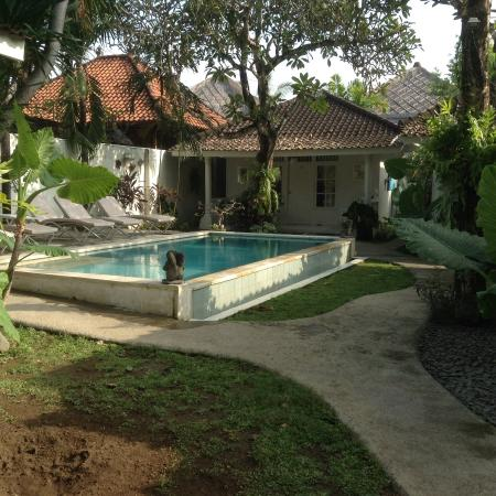 Gardenia Guesthouse: Pool