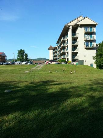 Arbors at Island Landing Hotel & Suites: View from picnic tables with geese coming to visit