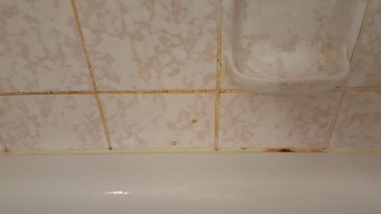 Hotel Grasbrunner Hof : Mold in Shower