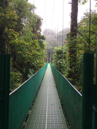 Santa Elena Skywalk : pont suspendu