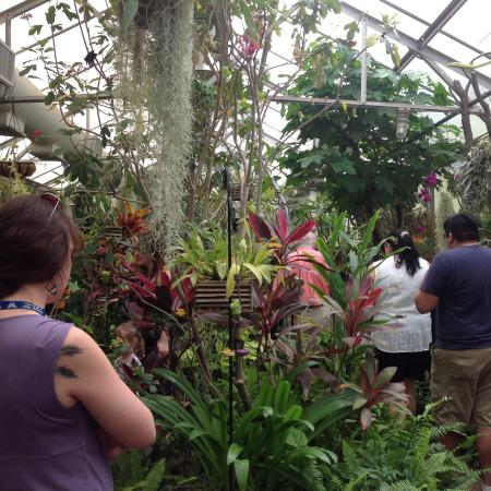 Tucson Botanical Gardens: Butterfly House
