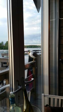 Utsikt från bordet. Och fläderblomspannacotta.