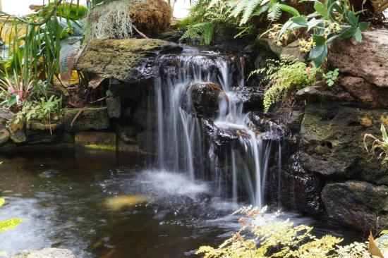 Sherman Library & Gardens: Indoor Waterfall