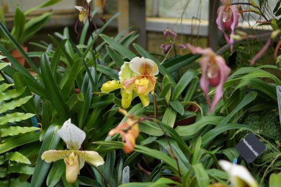 Sherman Library & Gardens: Great collection