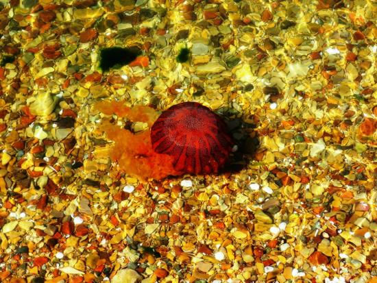 Inti-Mar-Paracas: medusa