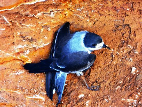 Inti-Mar-Paracas: Hermoso pájaro azul por identificarse