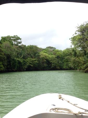 Gamboa Rainforest Resort Monkey Island Tour : photo2.jpg