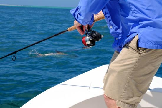 The big snook of the day picture of tampa bay fishing for Tampa bay fish