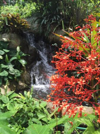 Samui Butterfly Garden : Nice waterfall. But maybe if they renamed it Butterfly Cemetery it might suite.