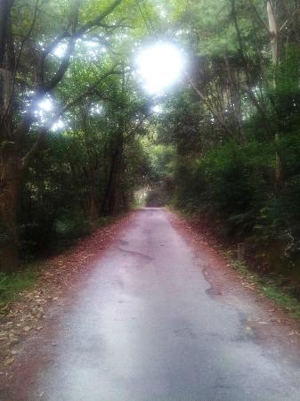 Guangxi Guilin Forest Park: Long road from the entrance. . .