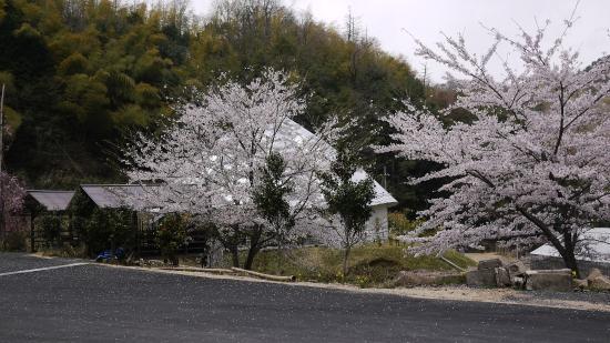 Kaya Tsubaki Cultural Museum