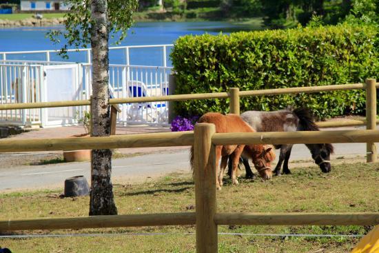 poneys-camping-lac-carnac