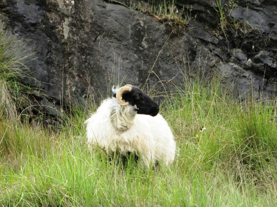 Connemara wild escapes