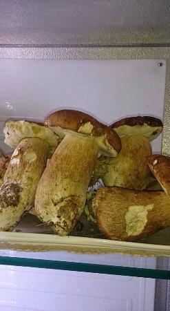 Trattoria Del Ghiottone: Funghi porcini freschissimi!