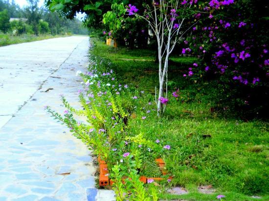 Туй-Хоа, Вьетнам: Grass
