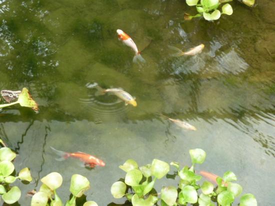 lago con peces picture of mariposas de mindo butterfly