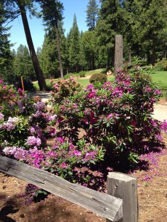 Camino, CA: Beautiful flowers at Apple mountain