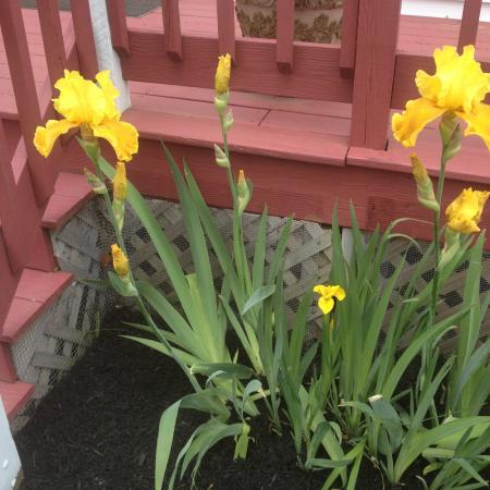 Martha's Vineyard Resort: Summer Flowers
