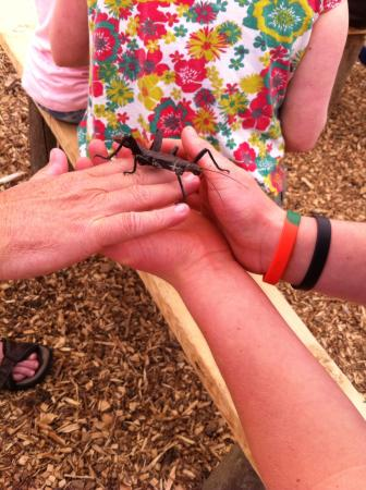 Axe Valley Wildlife Park: Creepy crawlies time!