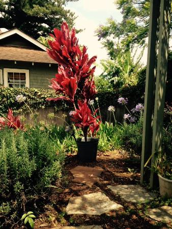 Hale Ho'okipa Inn Makawao: Beautiful plants!