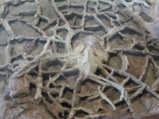 Fossil Picture Of St George Dinosaur Discovery Site At Johnson Farm Tripadvisor