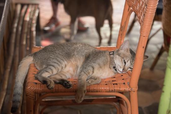 European Guesthouse: Cat