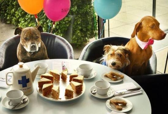 The Boathouse: Dogs like cafés too