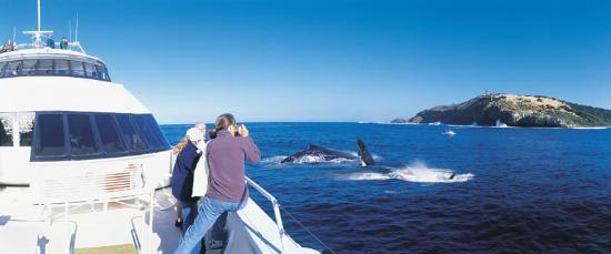 Tangalooma Island Resort Whale Watching Cruise