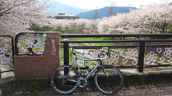 Gose City Sakura Bridge