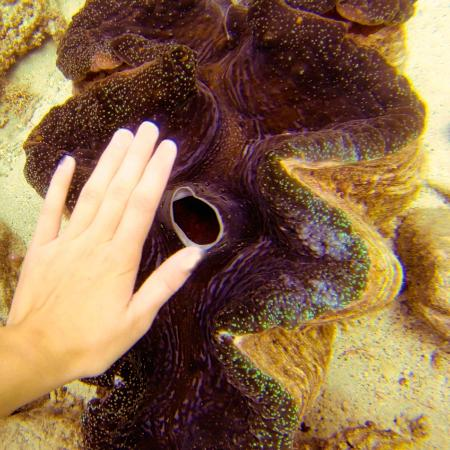 Namena Island Dive Resort: giant clam!