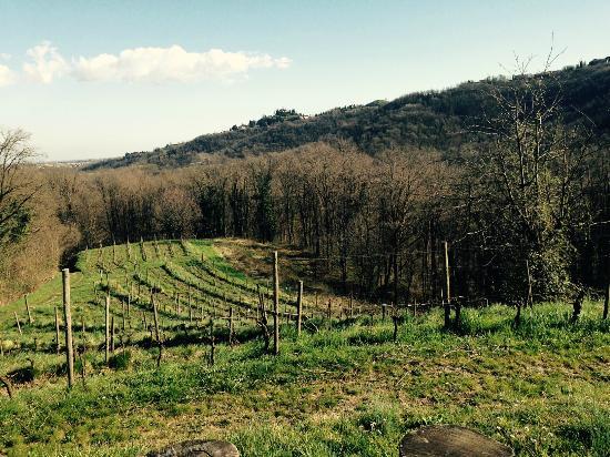 Agriturismo La Costa - Cascina Costa : Panorama dal giardino
