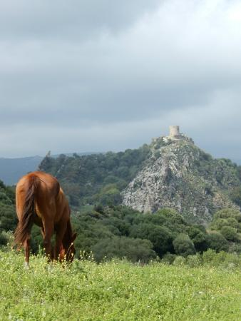 E3 Endurance Equestrian Experience: Castle in the distance - destination in sight