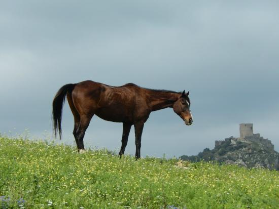 E3 Endurance Equestrian Experience: Castle in the distance